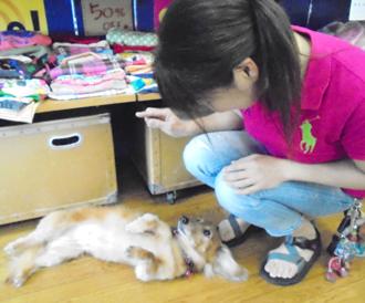 nakakiji-dogterrier